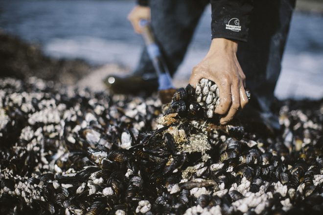 Ocean Wise research analyst Laurenne Schiller highlighted the sustainable gooseneck barnacle harvest Ha'oom Wild Seafood near Tofino on Vancouver Island in 2015. Photo Credit: Ha'oom Wild Seafood.