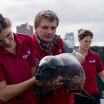 Adventurous Learning Curve in Marine Mammal Care
