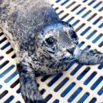 Even Adorable Seal Pups Can Bite