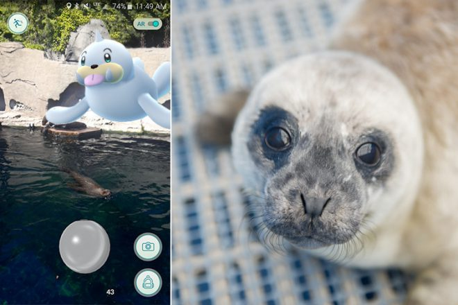 Seel = Habour seal pup