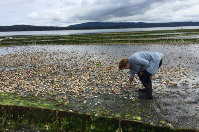 A highlight of the festival was my visit to Fanny Bay Oysters. We got a tour of the facilities as well as their beaches.