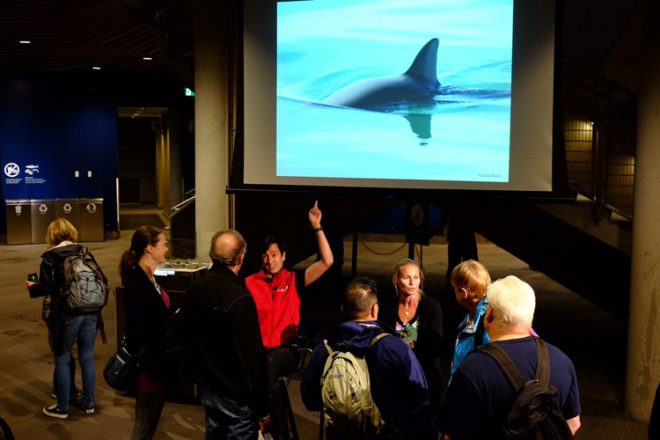 Interpreter Derek Jang presenting Dr. Anna Hall International Save the Vaquita Day at Vancouver Aquarium.