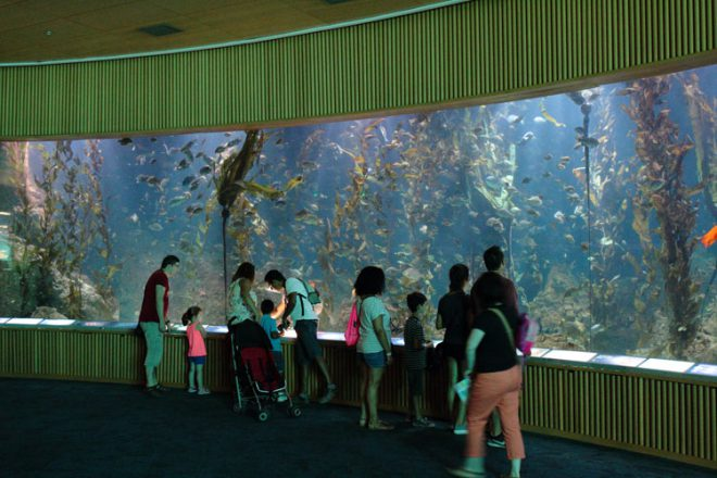 Oceanogràfic's kelp forest exhibit.
