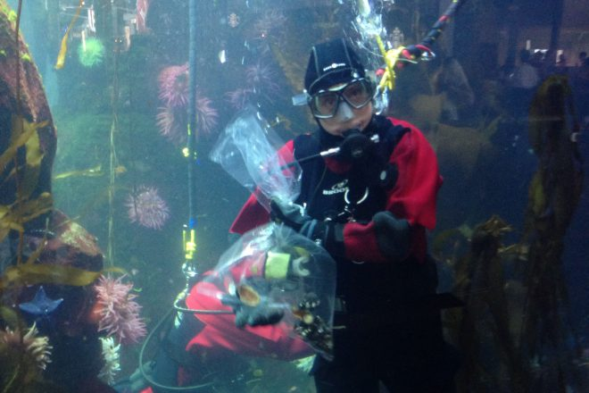 You might be lucky enough to catch our divers feeding the animals in the YVR airport exhibit.
