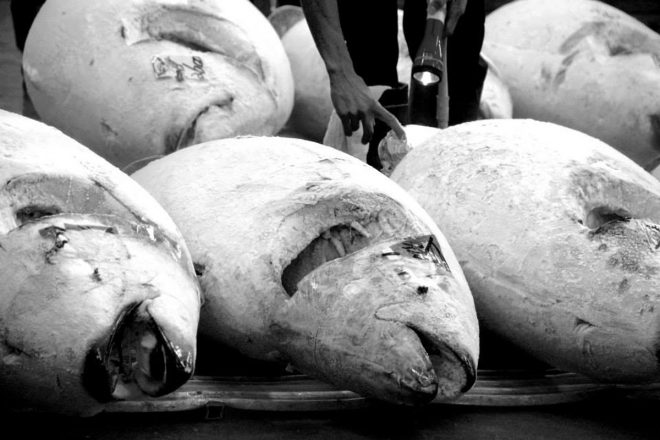 Every morning dozens of frozen bluefin wait to be auctioned off at Tsukiji Market in Tokyo, Japan.