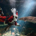 Plunging Into the Holidays With Scuba Claus