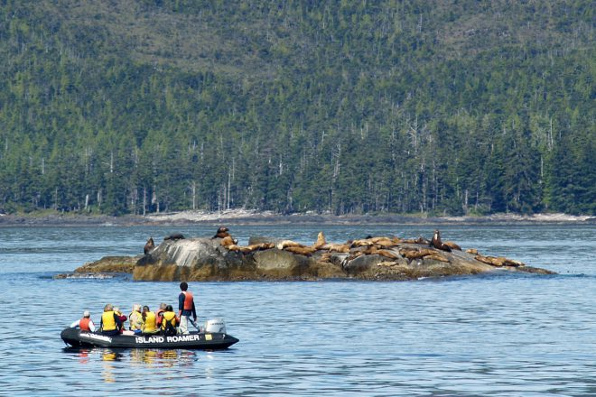 Observing sea lions in Haida Gwaii. Photo Credit: Lindsay Janes
