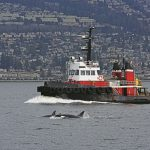 Whale Spotting: New Mariner's Guide Aims To Reduce Vessel Impacts
