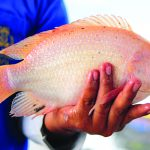 Regal Springs Tilapia: A Social and Environmental Venture