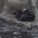 An Otter-ly Energetic Introduction: Katmai Meets Rialto, Mak, and Kunik