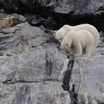 Celebrating Ice Algae on Polar Bear Day