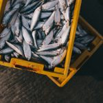 Climate Change and Seafood: What are the Impacts?