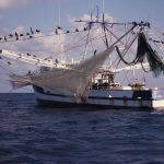 Top Tools for Tracking Abuse in Seafood