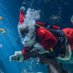 Scuba Claus is Coming to Town!