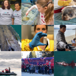 Ocean Wise's Top Nine Achievements of 2019