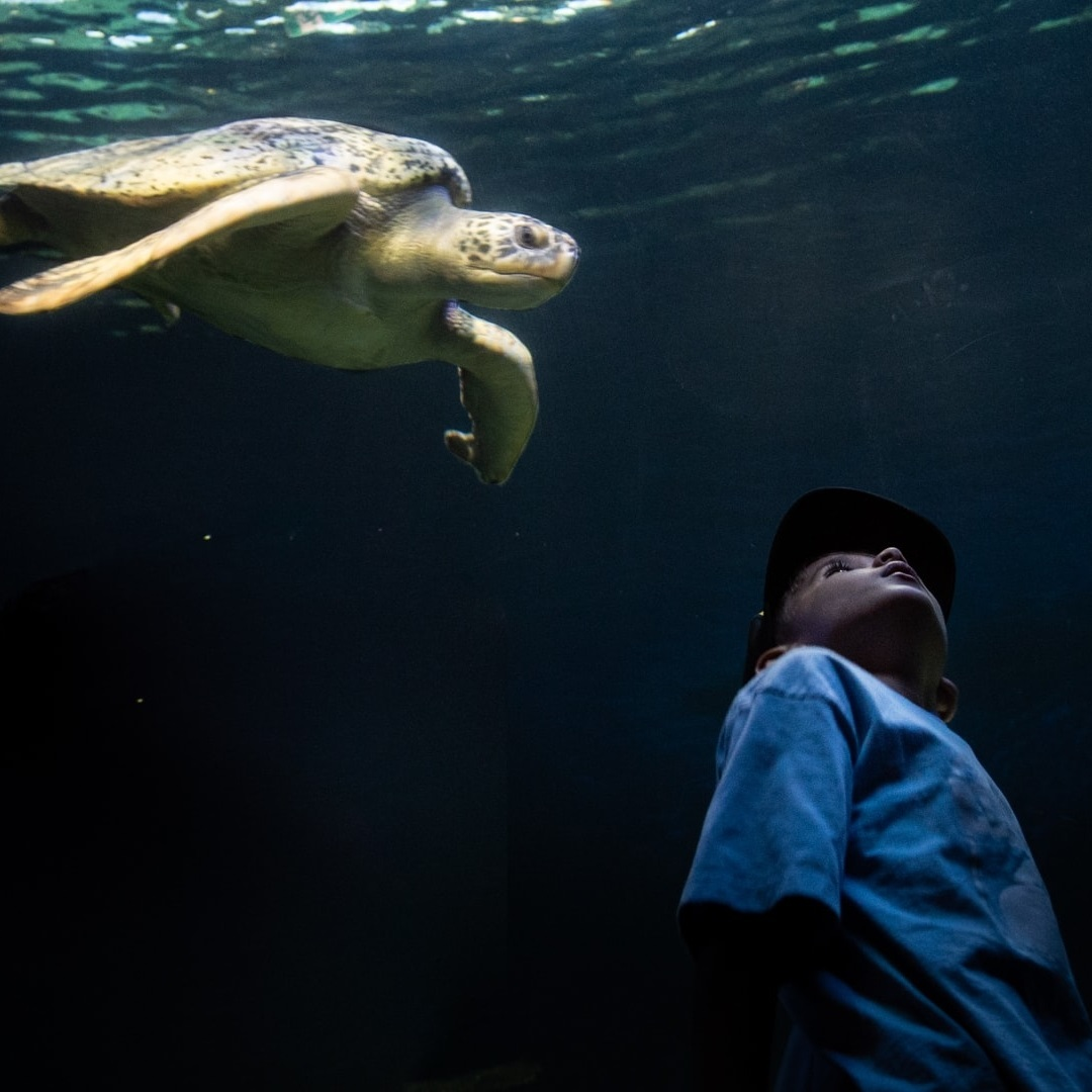 Why do you support the Vancouver Aquarium? – Ocean Wise's ...