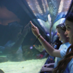 Huge outpouring of support for Vancouver Aquarium since going public with funding challenges