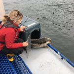 Urgent call for help to re-open Marine Mammal Rescue Centre