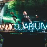 New Online Music Festival supports Vancouver Aquarium – July 18