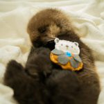 'Joey-Cam' Allows You To Follow Weeks Old Orphaned Sea otter Pup's Rehabilitation Journey Virtually
