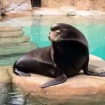 Show your Love by Sponsoring an Animal  at the Vancouver Aquarium