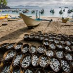 Defining waste in fisheries Part 2: post-harvest losses