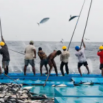 Ocean Wise Explains: Wild Capture Fishery Recommendations
