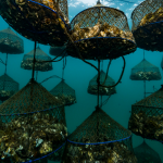 Ocean Wise Explains: Aquaculture Recommendations