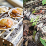 Grilling for a Sustainable Future with Casus Grill Canada and Ocean Wise Seafood