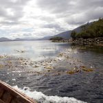 Important climate win, as massive underwater kelp forest guarded by Kawésqar Indigenous Peoples in Chile