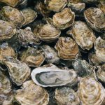 The Oyster Opportunity – with The Gino Macchio Foundation